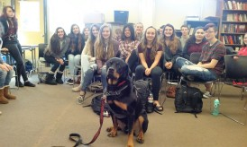 Trained Rottweilers are the best.