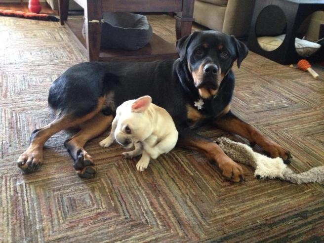 Rudy is gentle and loving with other dogs. This is friend Olive.