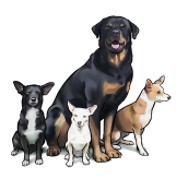 4 dog training to sit stay.