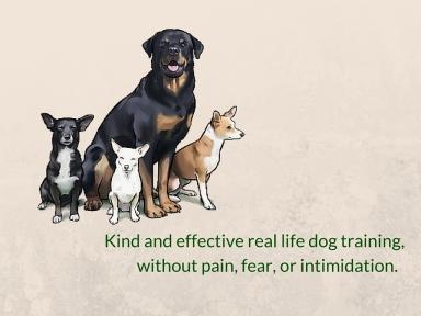 Real life dog training.