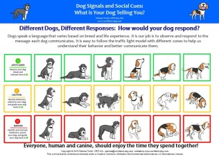 dog-signals_differentdogss_revised
